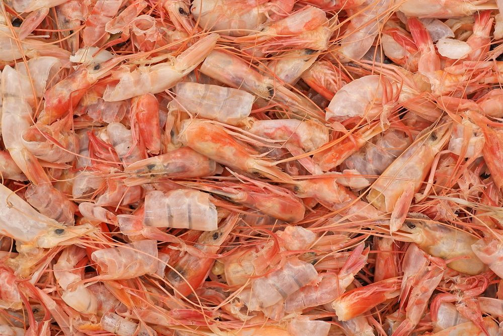 Import Shrimp shell meal, Shrimp head powder, Dried Shrimp Shell from Vietnam