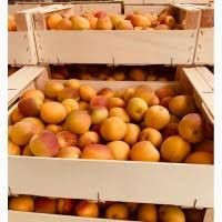 Export of fruit in bulk from farms and plantations from 10 tons