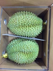 Premium Grade Durian Thailand Fresh Manufacturer from Thailand