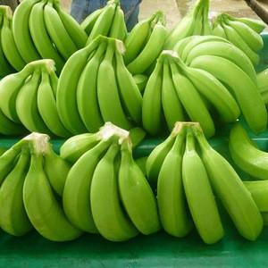 Cavendish Banana for sale