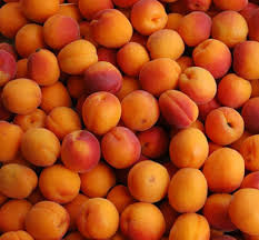 New Crop Fresh Apricots Fruit/Natural Fresh Apricots/Fresh Apricots Fruit for sale