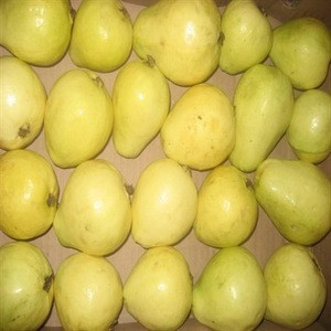 Sweet guava for sale