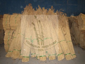 Thatching roof reed material