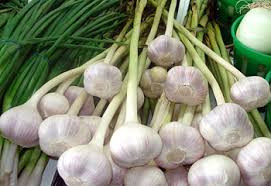 White Garlic,fresh garlics  for export