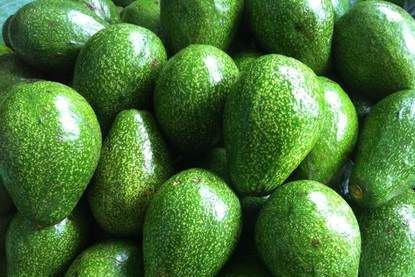 100% HOT VIETNAMESE The GREAT deal of Fresh Avocado