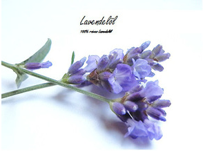 Lavender oil (organic or conventional)