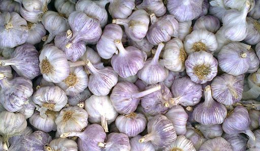 White and purple garlic