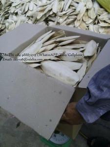 BEST SELLING CUTTLEFISH BONES//Ms.Thi Nguyen +84 988872713