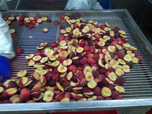 Chinese delicious fruits clean iqf frozen plum