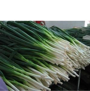 Fresh Scallions Fresh Green Onion, Green onion , Welsh onion
